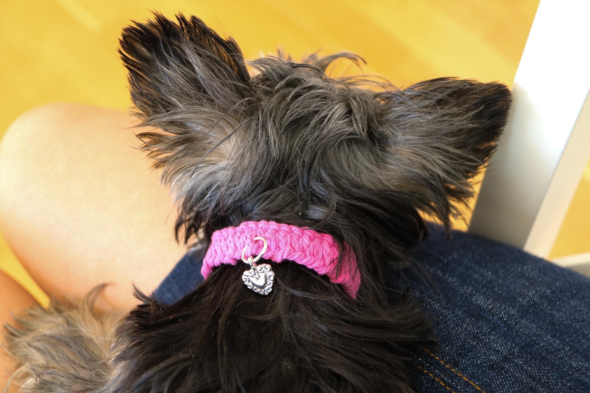 Hundhalsband i makramé