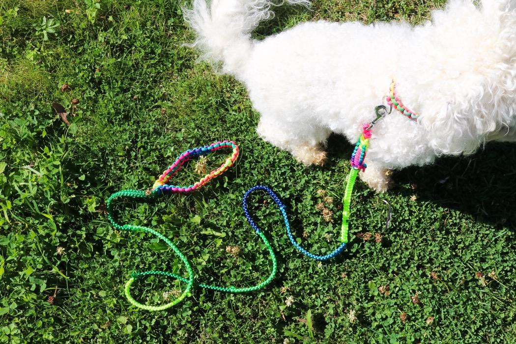 Diy: Hundkoppel