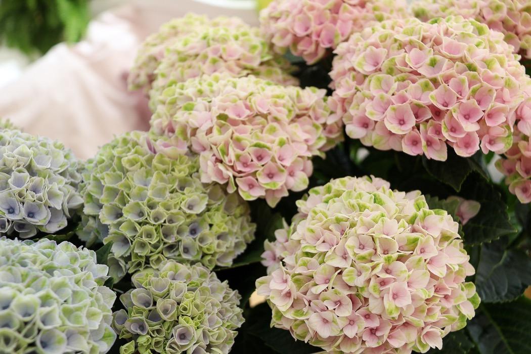 Blompyssel med Hortensia