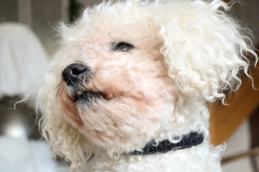 Diy: Hundhalsband