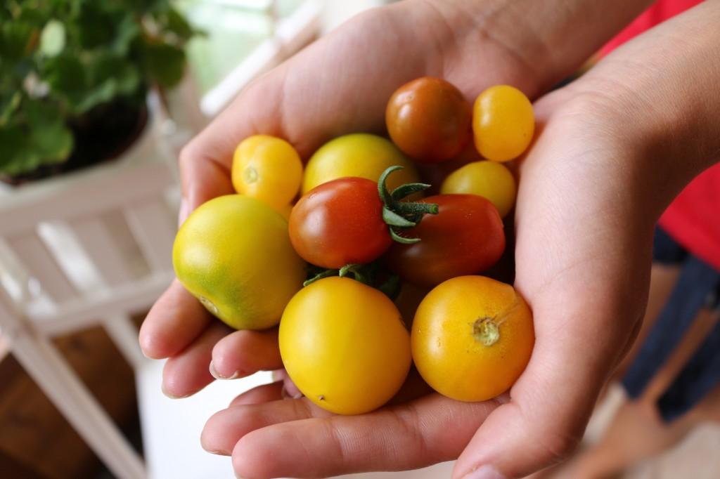 Växtstöd till tomaterna