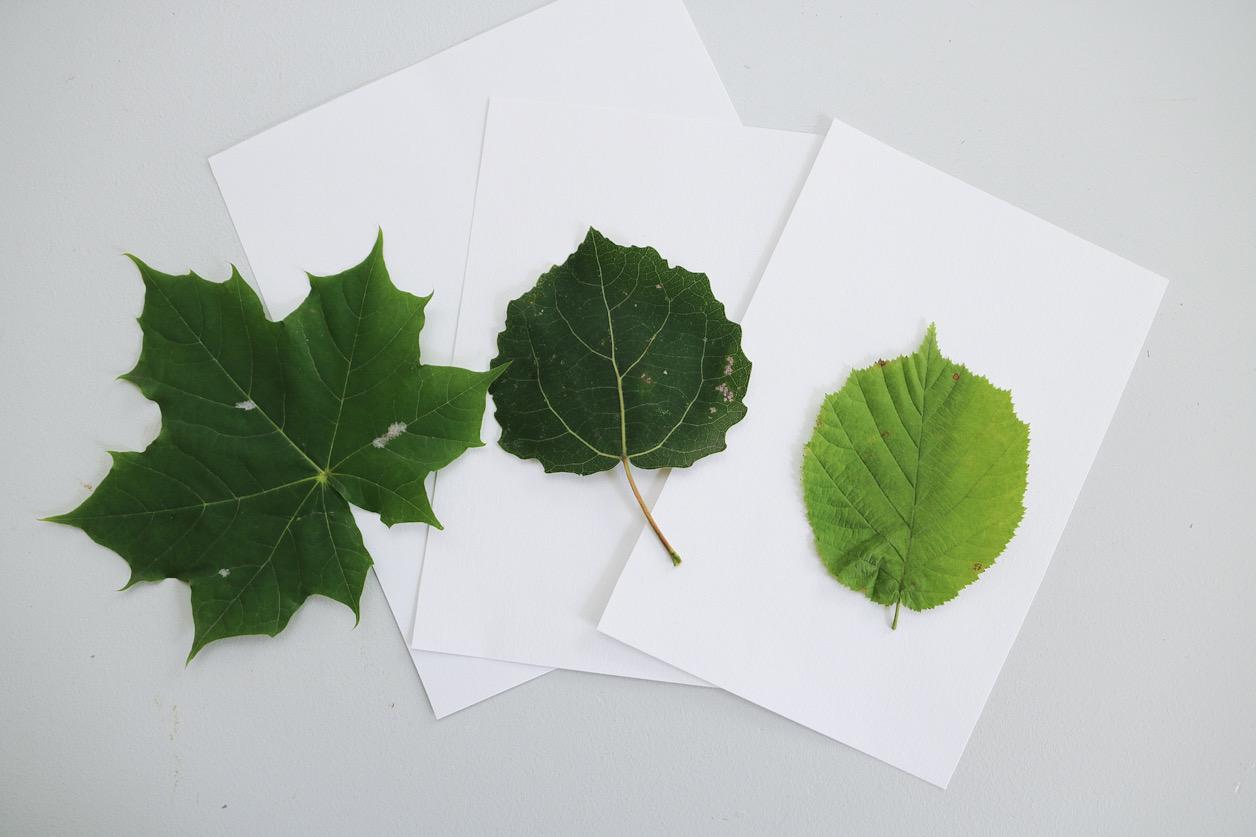 Löv papper